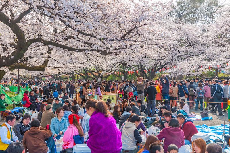 Le feste di primavera nel mondo - Hanami Ueno Park, Tokyo, Japan