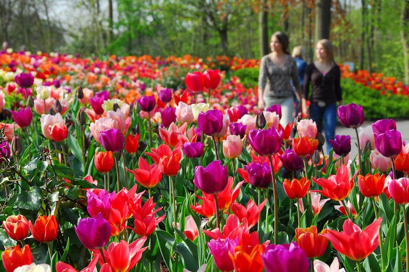 Le feste di Primavera nel mondo - Keukenhof, Olanda
