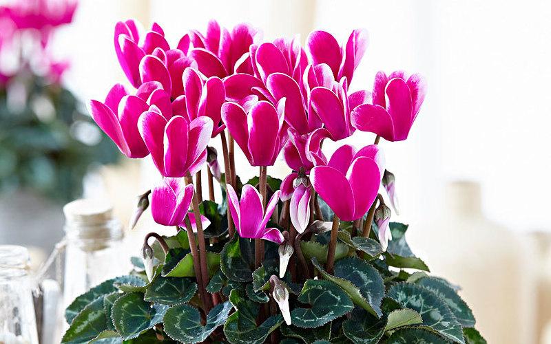Fiori invernali: colora il tuo balcone – Thesignofcolor